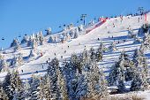picture of serbia  - Slopes of winter resort Kopaonik Serbia with trees - JPG