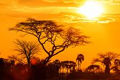 stock photo of orange-tree  - Orange glow of an african sunset with tree in front - JPG