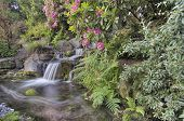 Garden Waterfall In Spring