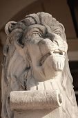 Lion Sculpture - Traditional Symbol Of Lviv