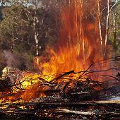 Roaring Hot Fire In Australian Bush