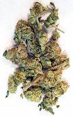 Broken Green Buds Marijuana Plant Flowers Cannibis Natural Medicine