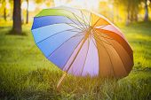 Rainbow umbrella on green grass background