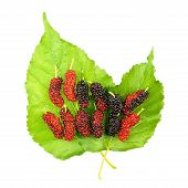 Red And Black Mulberry On Leaf Isolated