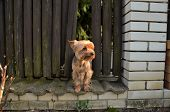 Little Dog Standing Alone