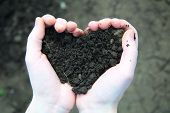 Hand Holding Black Soil In The Form Of Heart
