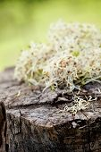 stock photo of soybean sprouts  - Heathy eating food - JPG