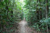 trekking in the rain Forest