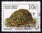 Postage Stamp South Africa 1993 Geometric Tortoise, Reptile