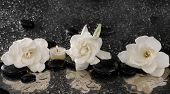 Three gardenia flower and candle on pebbles �¢�?�?wet background