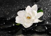 spa concept �¢�?�?gardenia flower