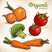 Vegetables Vector Set