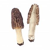 pic of morchella mushrooms  - Whole and half of Morel mushroom isolated on white background - JPG