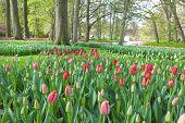 Springtime in Keukenhof Gardens Lisse Netherlands.