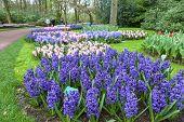 Keukenhof Garden- Lisse- Netherlands