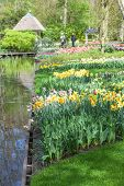 Blooming flowers in Keukenhof Garden Lisse Netherlands