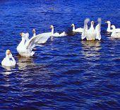 Dance Of Goose