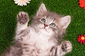 Cute gray kitten on artificial green grass