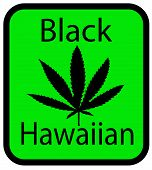 Black Hawaiian marijuana
