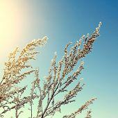 Frozen Branch