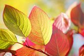 Colorful autumn leaves on tree outdoors, close-up view
