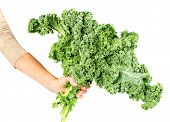 stock photo of kale  - Kale cabbage - JPG
