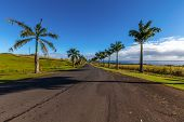Palm Trees Road