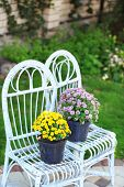 Yellow and lilac flowers in pots on wicker chairs on garden background