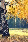 Autumn Season, Yellow Foliage Tree In Forest Background