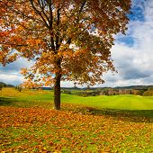 Lonely Tree On A Golf Course In Autumn