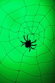 Spider on web. Halloween decoration concept
