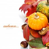 Autumn mini pumpkins and leaves over white (with easy removable sample text)