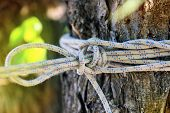 Rope knot in outdoor background