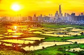 hong kong countryside sunset, rice field and modern office buildings