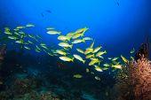 Coral, fish underwater in ocean