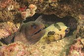 Moray Eel and Burrfish
