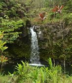 Exotic Waterfall In Hawaii