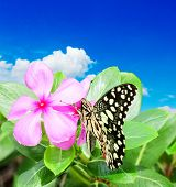 pic of suny  - Butterfly sitting on a pink flower in a suny day in the background of blue sky with white cloud - JPG