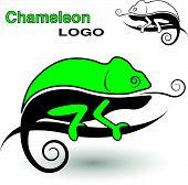 stock photo of chameleon  - Chameleon logo - JPG