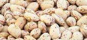 stock photo of pinto  - beautiful macro of colored pinto beans in studio - JPG