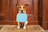stock photo of dog-walker  - jack russell terrier dog left alone outside home with luggage ready to go on his own - JPG