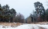 stock photo of dirt road  - Dirt road in the winter forest in the cloudy day - JPG