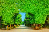 image of tree trim  - Landscape with green summer trees in the park - JPG