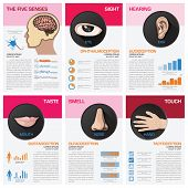 pic of senses  - The Five Senses Chart Diagram Infographic Infographic Design Template - JPG