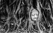 foto of buddha  - Black and white buddha head sandstone in tree roots at Wat Mahathat Ayutthaya Thailand - JPG
