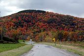 Fall Foliage 30