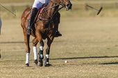 stock photo of pony  - Polo equestrian rider horse pony game action unidentified abstract - JPG