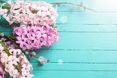 picture of willow  - Background with fresh pink hyacinths and willow in ray of light on green painted wooden planks - JPG