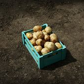 stock photo of wooden crate  - New potatoes in wooden crate over soil background - JPG
