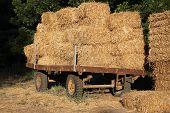 stock photo of threshing  - Straw  - JPG